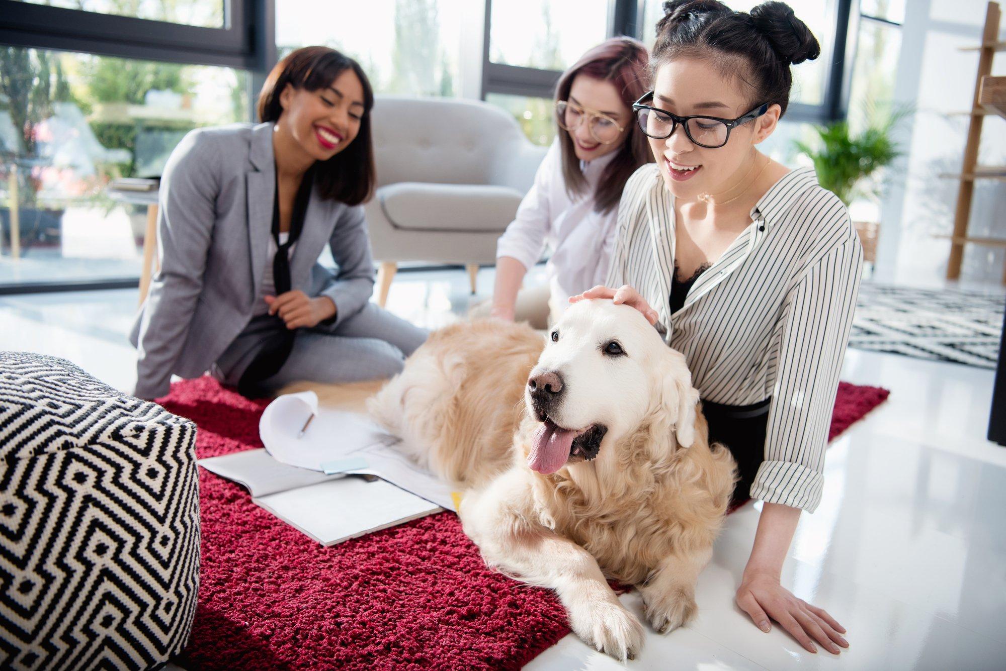 Multiethnic businesswomen petting dog at office